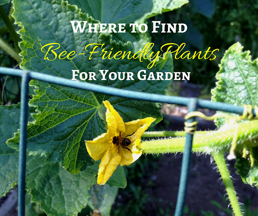 Finding Bee-Friendly Plants