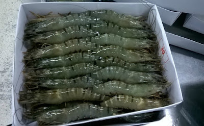 Black Tiger Shrimp Exporters Ready to Ship