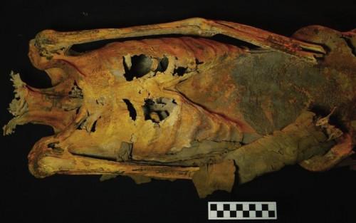 Αρχαίες μούμιες γυναικών γεμάτες τατουάζ αποκαλύφθηκαν στην Αίγυπτο