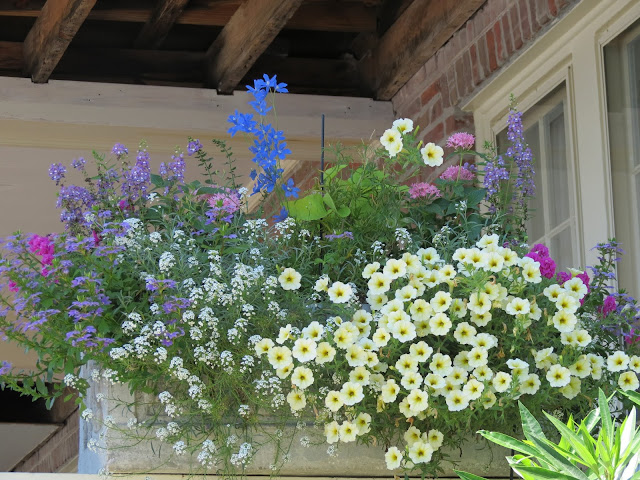 top window box easy to maintain ideas plants part sun better homes and gardens