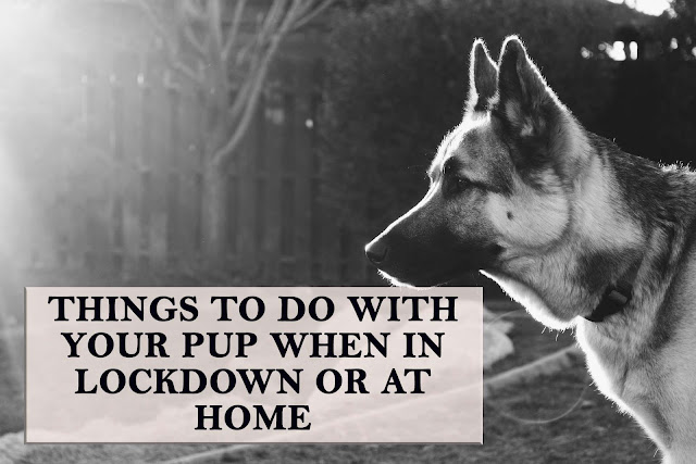Keep reading to find out 7 amazing and fun activities you can do with your pup during lock down