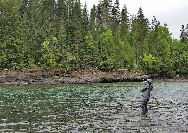Hyun fighting a salmon at Lady Gray, St. Jean river, Gaspé