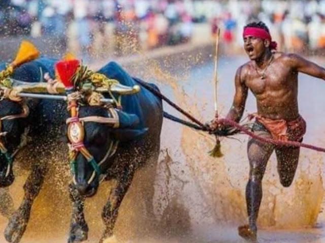 कम्बाला रेस में दौड़ने वाले श्रीनिवास ने ट्रायल में हिस्सा लेने से इनकार किया, कर्नाटक सरकार ने उनका सम्मान किया