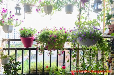Trồng hoa trên ban công giúp tăng tính thẩm mỹ cho căn hộ