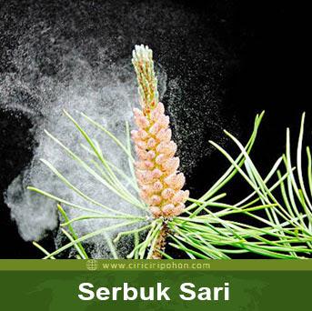 ciri ciri pohon serbuk sari