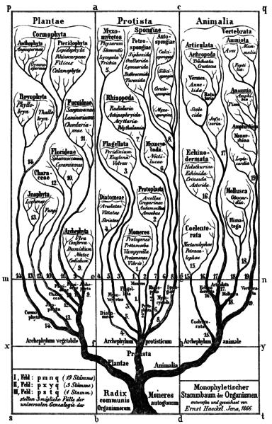 Sistem Klasifikasi 3 Kingdom