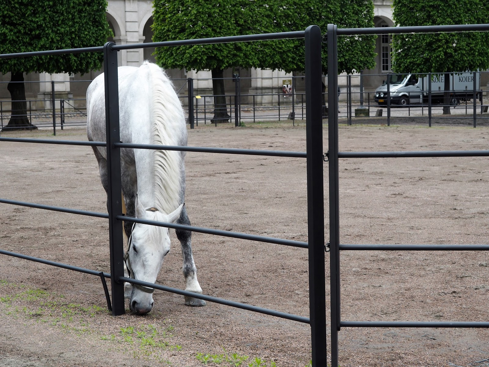 A white horse at Christiansborg Palace, Copenhagen