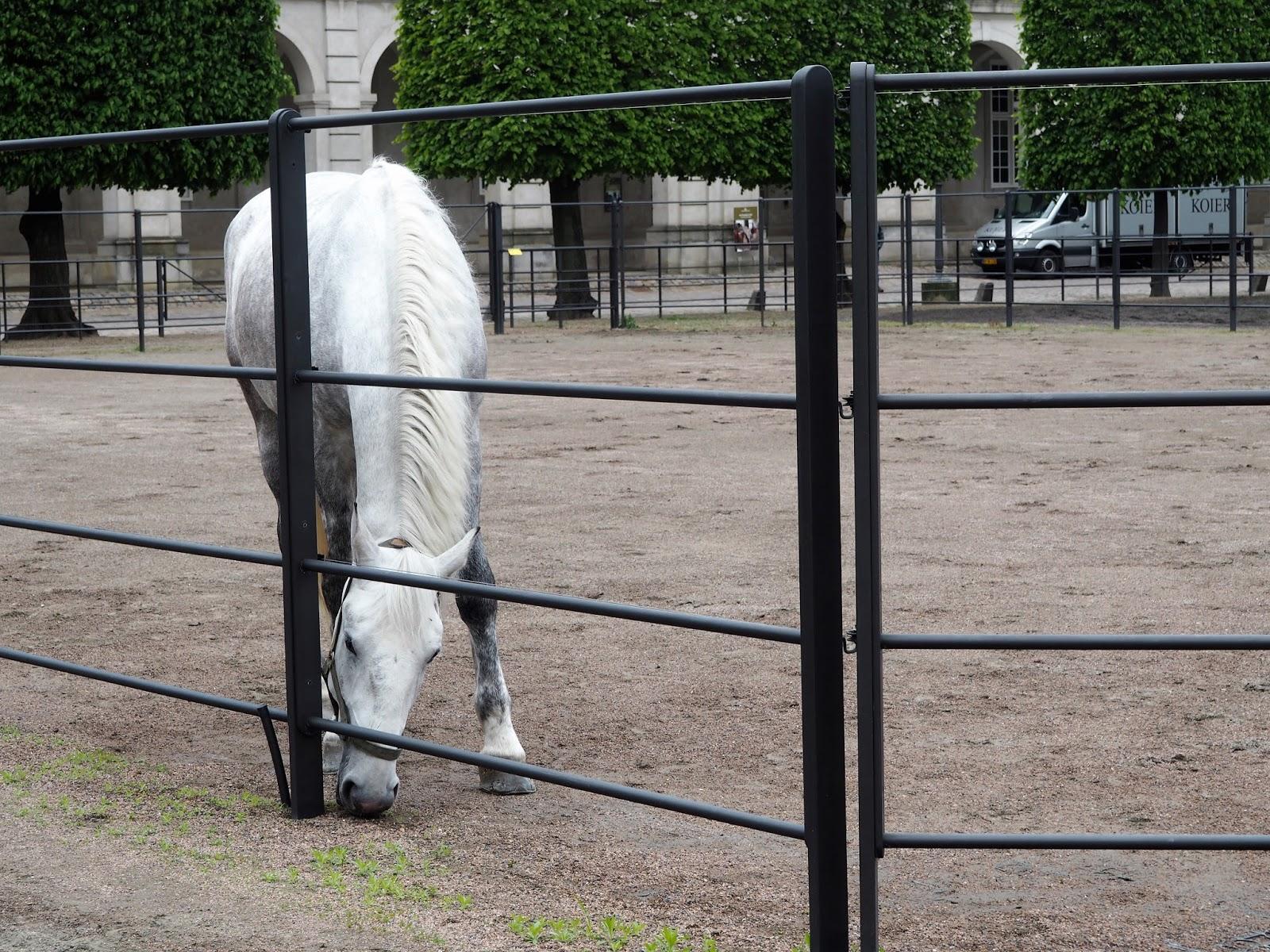 A white horse at Christiansborg Palace, Copenhagen