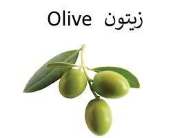 الزيتون : Olive