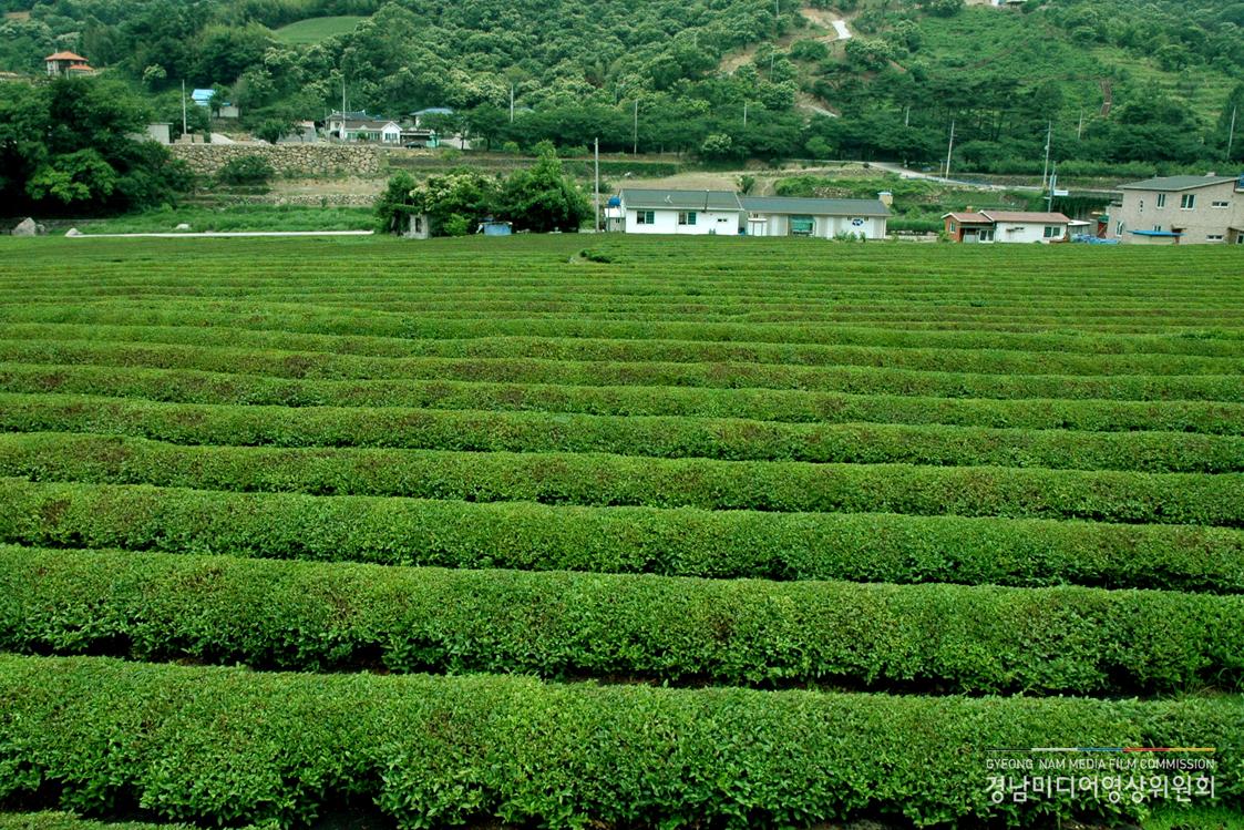 Beautiful Green Tea Gardens HD Wallpapers| HD Wallpapers ...