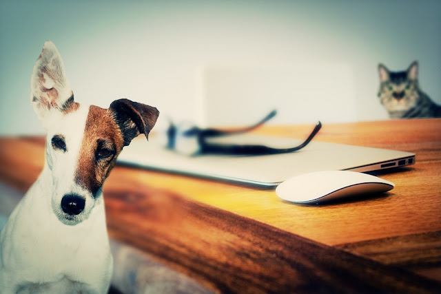 dog and cat using laptop on the table with apple branded mouse and glasses images in hd free download