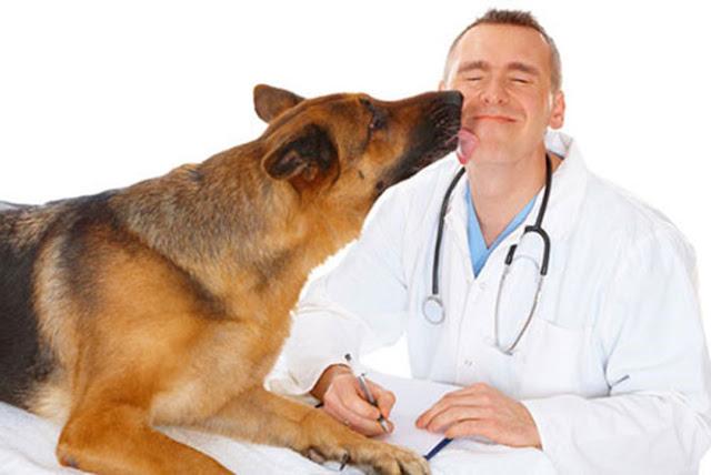 Yêu thương và chăm sóc tận tình cho bệnh nhân là phẩm chất cần có ở mỗi bác sĩ, dù là bác sĩ thú y - Ảnh minh họa: Shutterstock