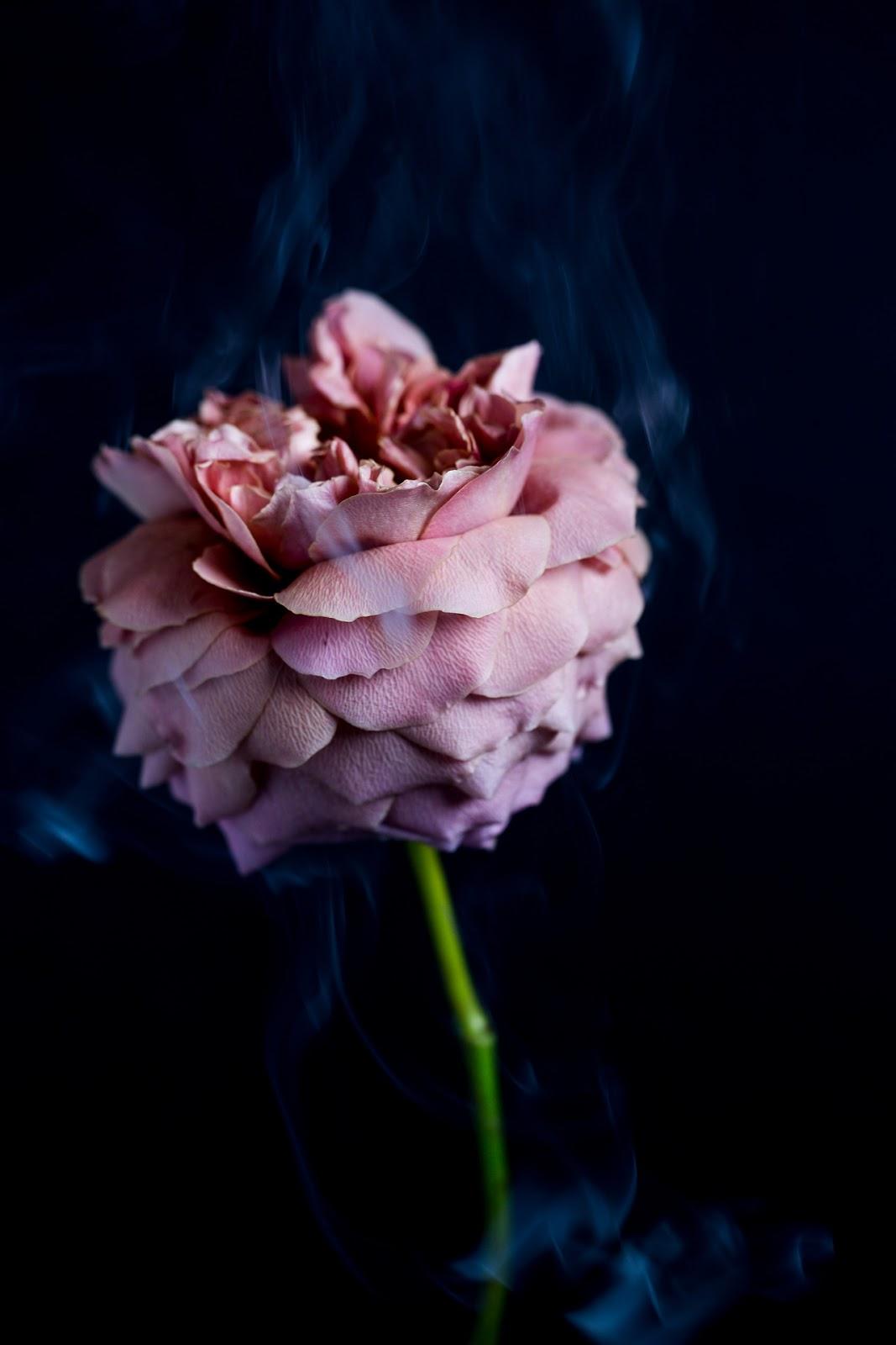 All The Pretty Flowers September 16 2017 Zsazsa Bellagio Like