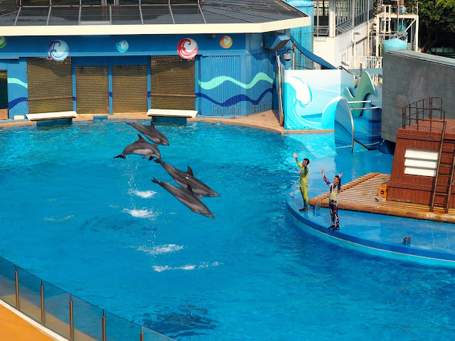 Dolphins performing in the Ocean Wonders show in Ocean Park