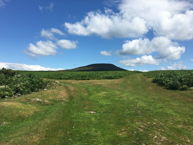 A-Walk-up-Sugarloaf-paths-divide-right-and-left-with-peak-of-sugar-loaf-in-view