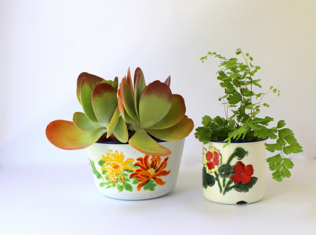 Succulent and fern plants in vintage enamelware