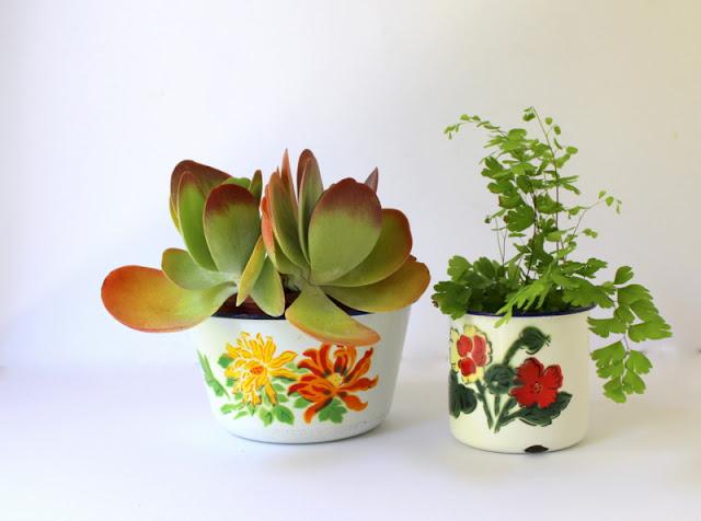 Succulent and fern plants in vintage enamelware