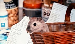hamster shopping