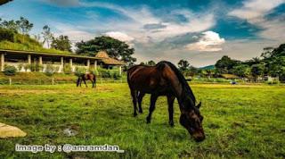Wahana Berkuda Taman Lembah Dewata