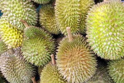 Mengetahui  Khasiat Buah, Kulit dan Daun Durian yang tidak banyak orang tahu