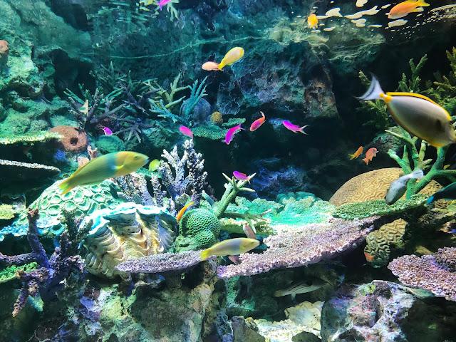 Aquarium de Sunshine City à Tokyo