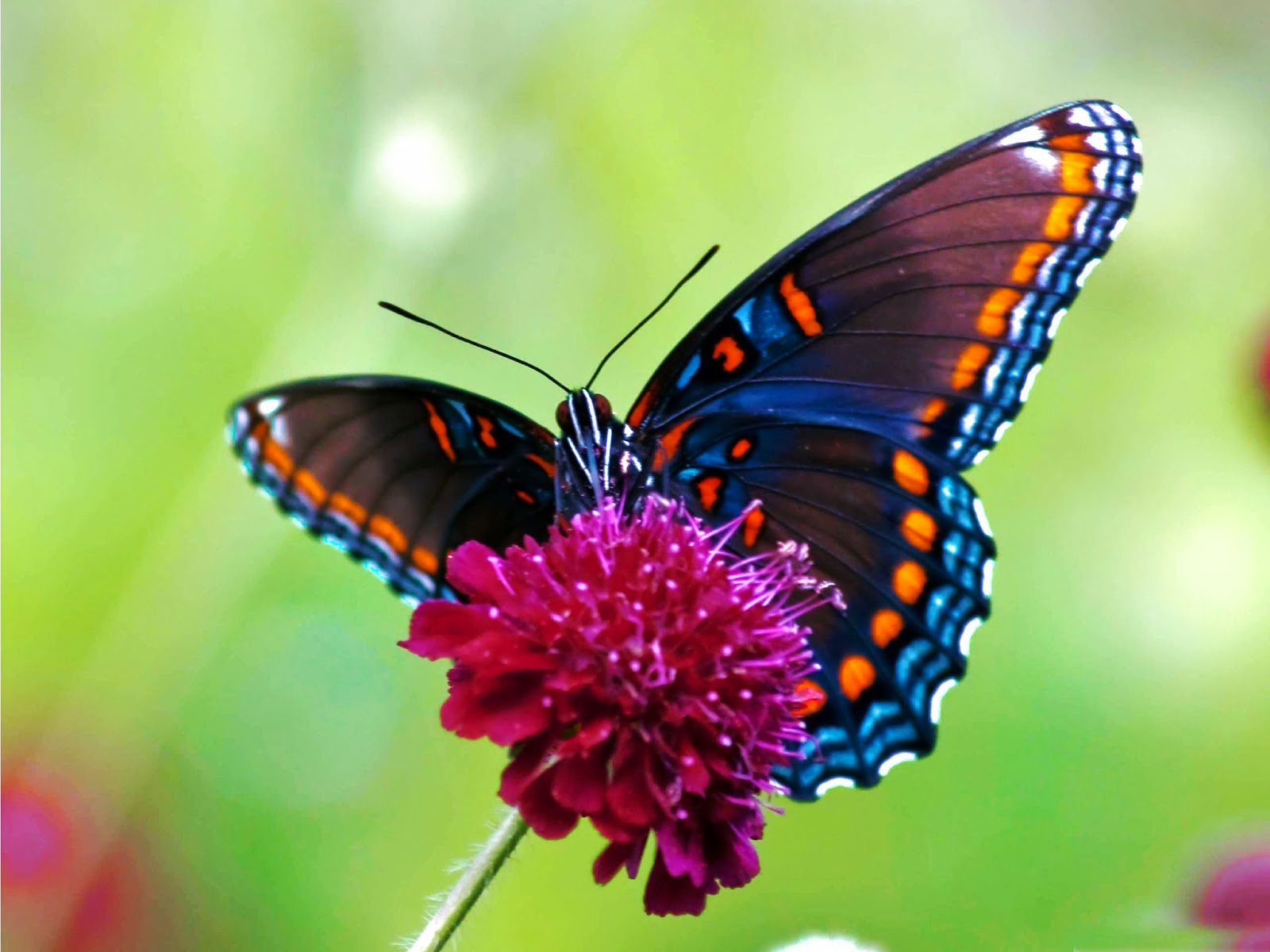 butterfly wallpapers flying - photo #37