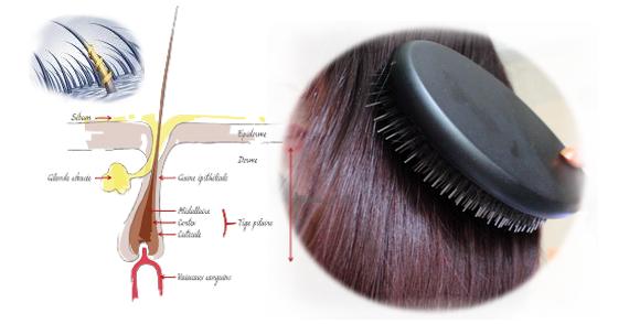 phylact 39 hair apprivoiser le naturel cure de s bum j 39 ai arr t de me laver les cheveux. Black Bedroom Furniture Sets. Home Design Ideas