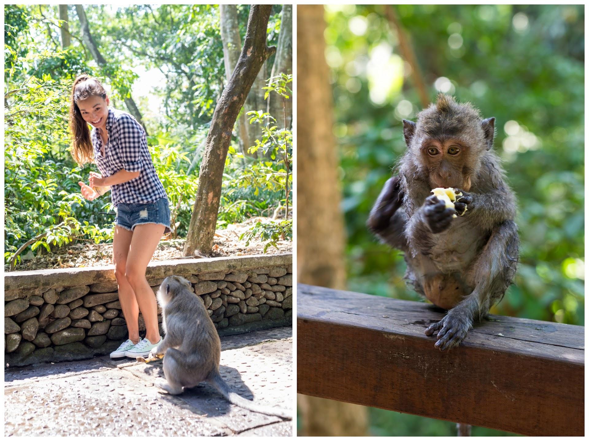 bali ubud monkey sanctuary, bali travel tips, monkey photography, travel photographer blogger, mint converse, what to wear hot humud climate, southeast asia, ootd, asian blogger, couple bloggers, korean, japanese