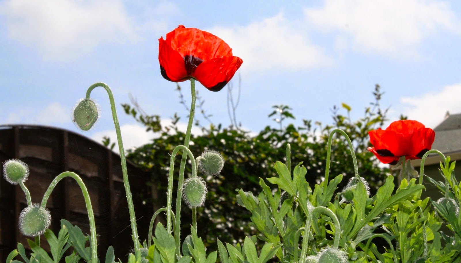 Flower, Handmade Monday : Poppies In The Garden