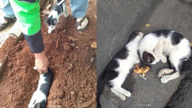 Sedih, Dikira Masih Hidup, Anak Kucing Menyisakan Makanan untuk Saudaranya