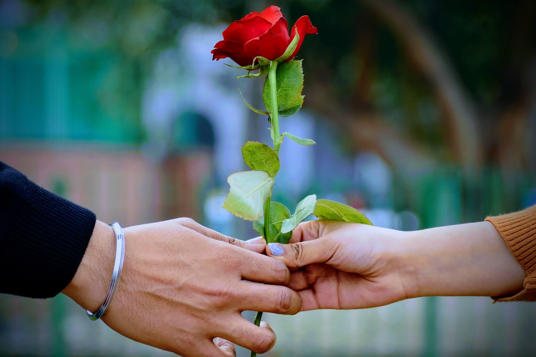 وردة الحب معهما هما الاثنين