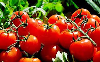 Tomate, hortaliza