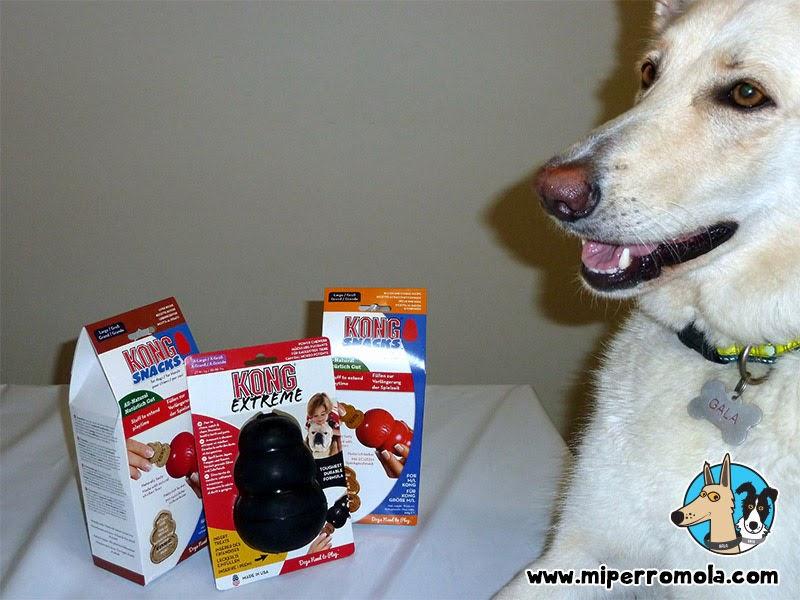 Can de Palleiro con una variedad de juguetes Kong