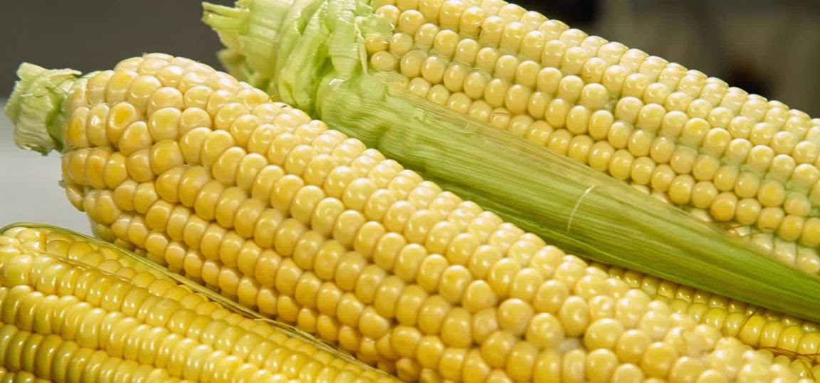 Maiz y gramineas en la dieta humana