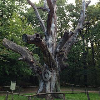 photo du chêne des pendus
