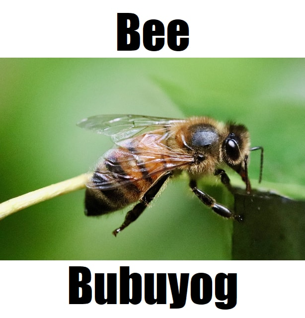 Bee in Tagalog