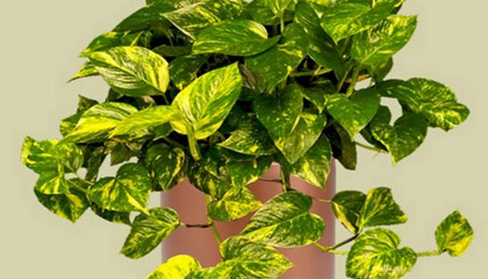 Diario7 archivos diez plantas de interior que purifican - Plantas de interior que purifican el aire ...