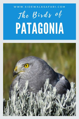 The Birds of Patagonia