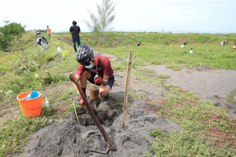 Pesisir Selatan Jateng Rawan Tsunami, Ganjar Ajak Masyarakat Tanam Pohon