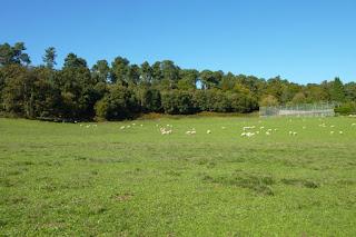 terrenos en galicia fincas