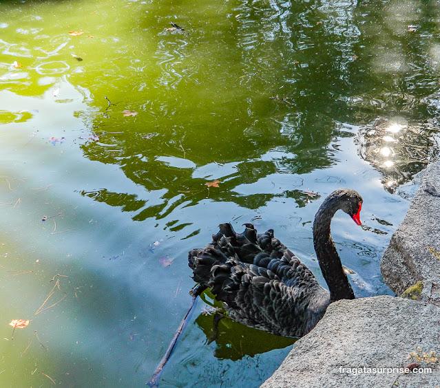 Cisne no Campo del Moro, Madri