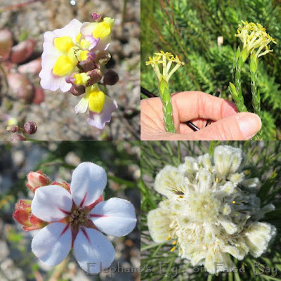 Cape Point flowers in September