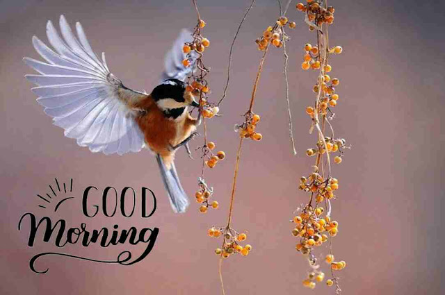 Awesome good morning image nature bird
