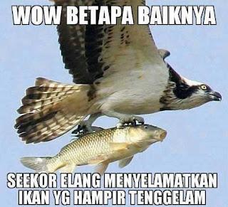 meme gambar burung lucu 12