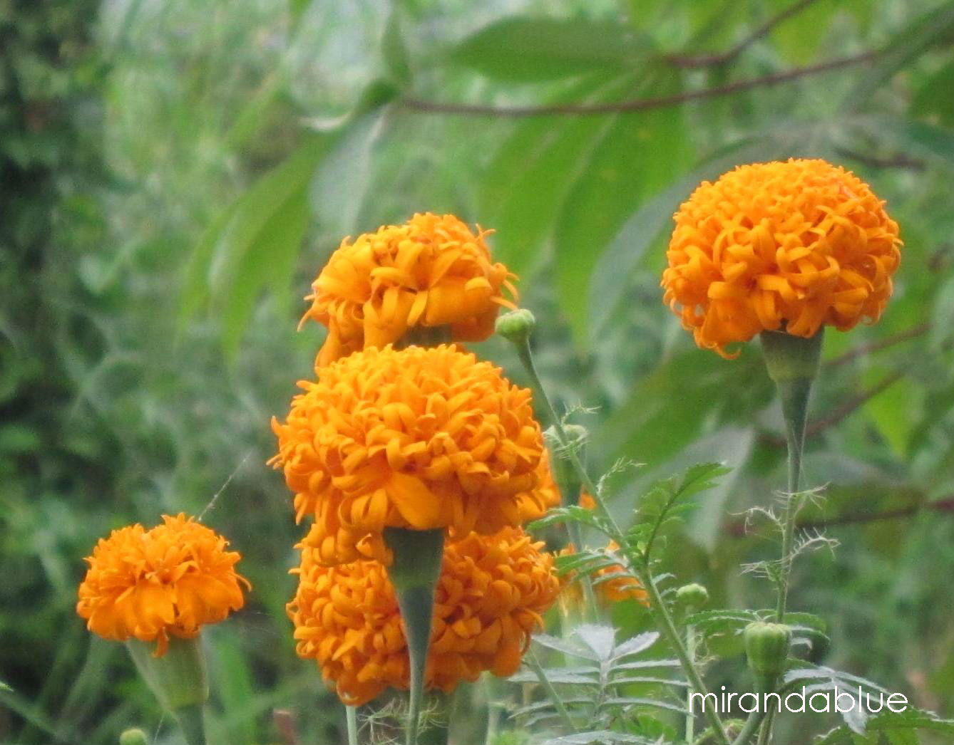 Live in the Moment: Marigold