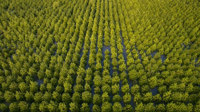 """CP Foods moves towards low-carbon organization, help driving the """"Decade of Ecosystem Restoration"""""""