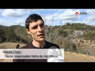 Adrià Giol, responsable dels Horts de Can Pinyol