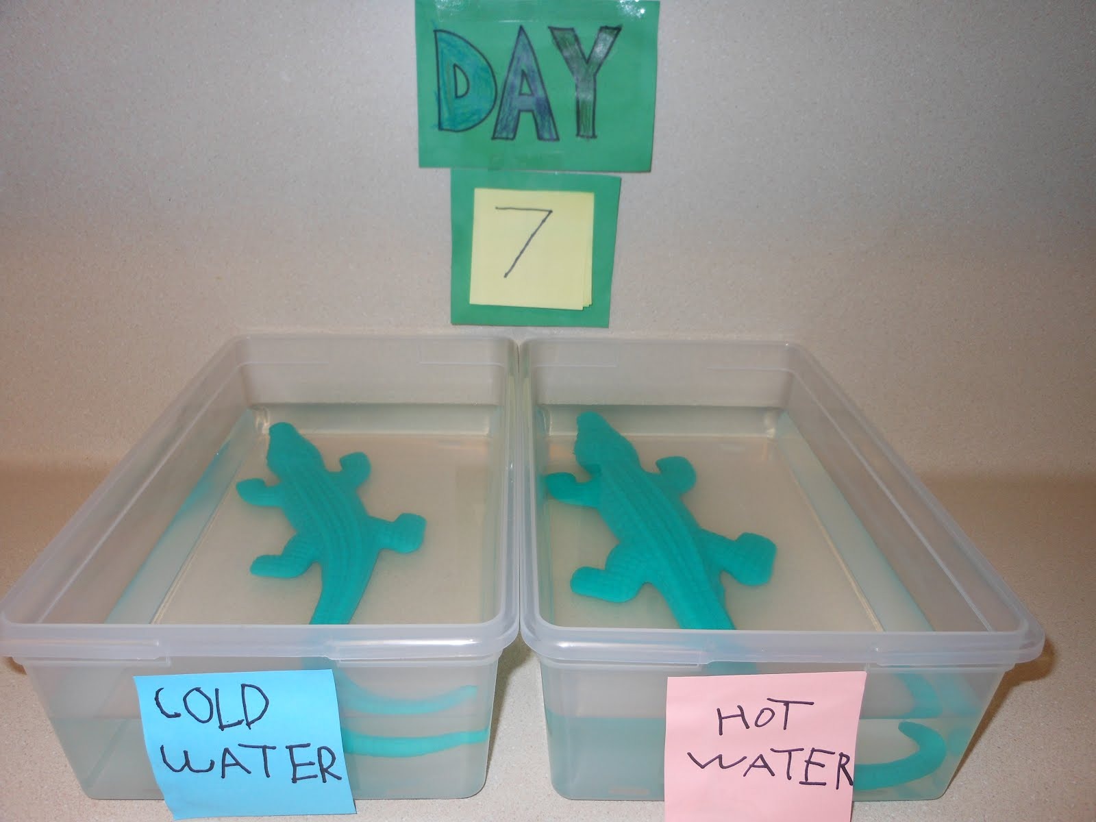 DSCN1659 - Science Fair Projects For Kindergarten