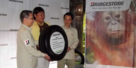 Bridgestone 'Terjun' ke Hutan Selamatkan Orangutan