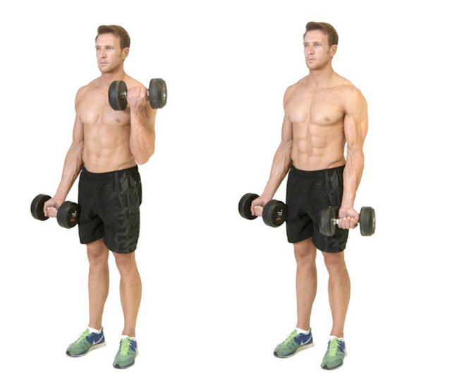 Dumbbell Exercises For Arms